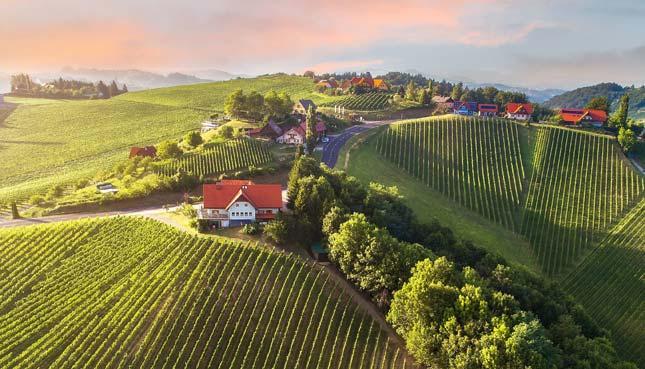 Lebendige Tradition erleben auf 4 der schönsten Weingüter Österreichs