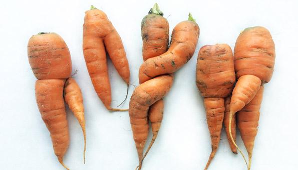 Tipps gegen Food Waste: hässliche Karotten ugly fruits and vegs kaufen