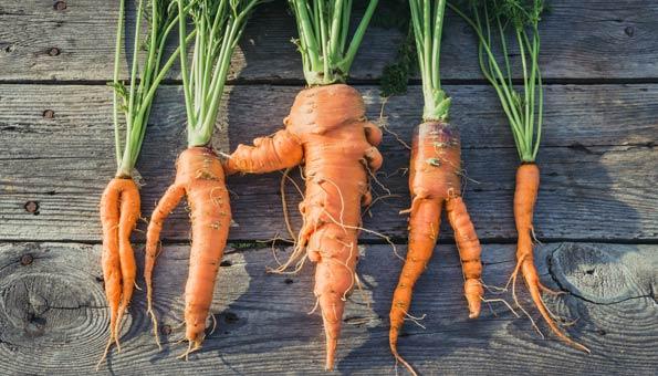Zweitklass-Gemüse und -Obst direkt nach Hause geliefert bekommen