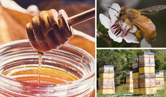 Manuka-Honig: Seine Wirkung und Anwendung