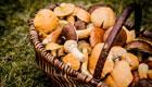 Trend Pilze sammeln: Warum das Pilze bestimmen so wichtig ist