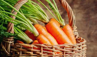 Karotten richtig lagern: So halten sie am längsten