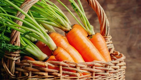 Karotten lagern und richtig aufbewahren für langen Genuss