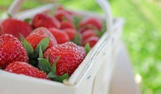 Auf diesen Feldern in der Schweiz pflücken Sie Erdbeeren selber