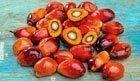 Warum Palmöl häufig die bessere Zutat ist