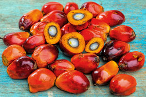 Palmölkerne zur Gewinnung von Palmöl