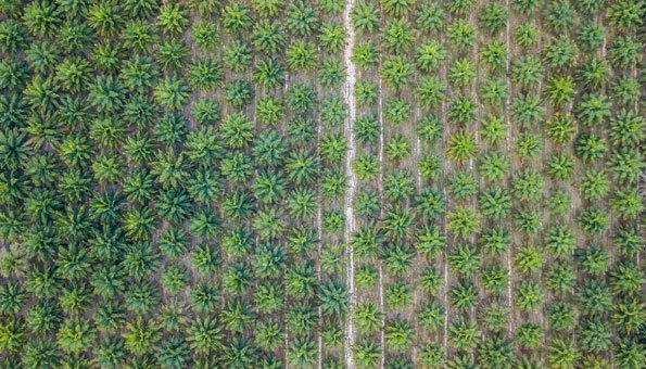 Warum Palmöl oft die bessere Zutat ist