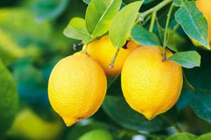 Zitrusfrüchte weisen oft einen Pestizidcoctail auf der Schale auf.