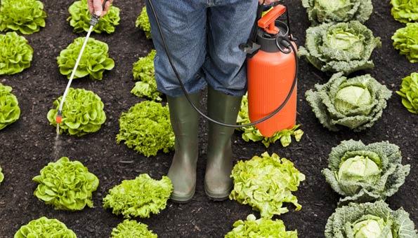 Pestizide: Diese Lebensmittel enthalten am meisten Pestizidrückstände