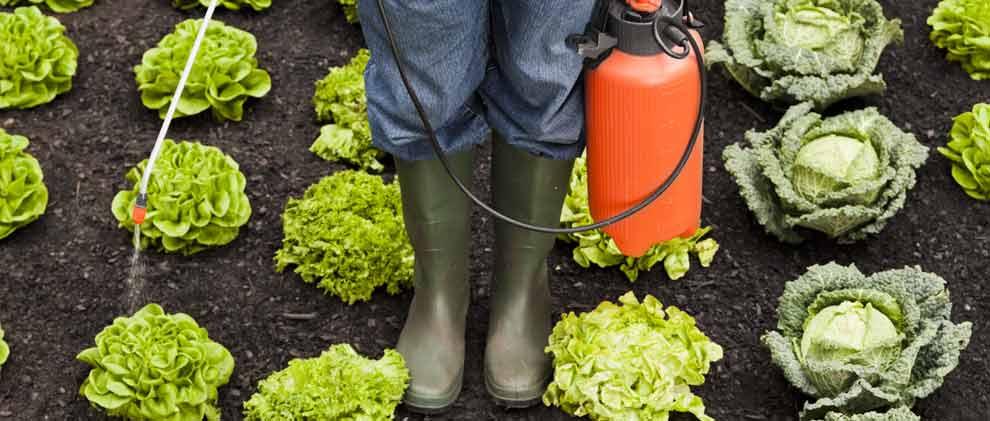 Dieses Obst und Gemüse enthält am meisten Pestizide