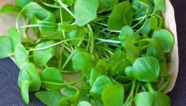 5 Gründe, warum Portulak viel öfter in Ihrem Salat landen sollte