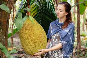 Reife Jackfruits können bis zu 35 Kilo schwer werden.