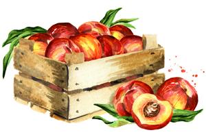 Feinen Sirup selber machen: Pfirsich