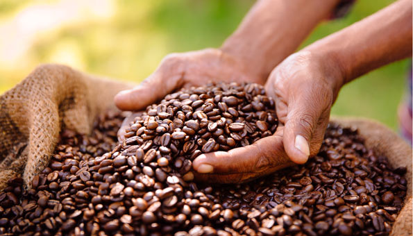 Wasserverbrauch von Lebensmitteln: Röstkaffee und Kaffeebohnen