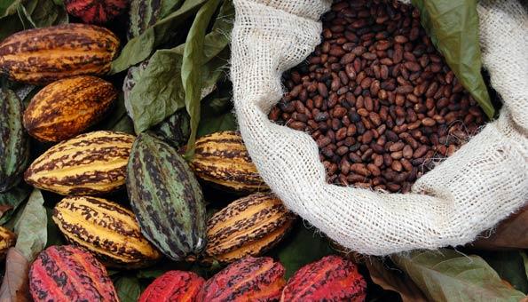 Wasserverbrauch von Lebensmitteln: Kakaobohnen verbrauchen am meisten Wasser