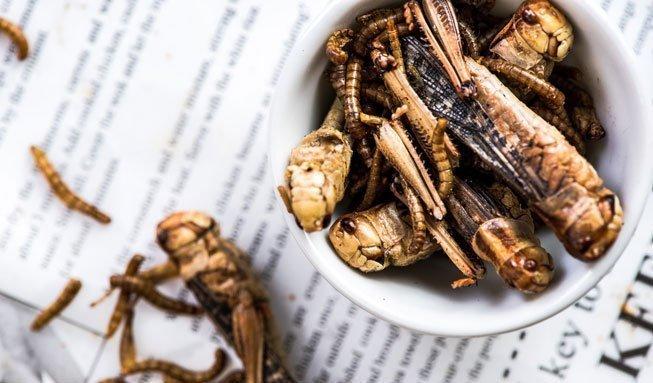 Warum Insekten öfter auf unserem Speiseplan stehen sollten