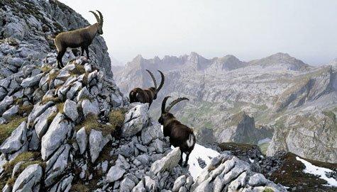 Wandern Appenzell: Königstour im Alpstein