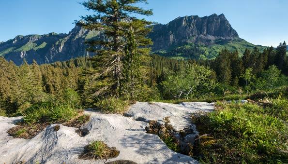 Reiseziele Schweiz: Bödmerenwald im Muotathal