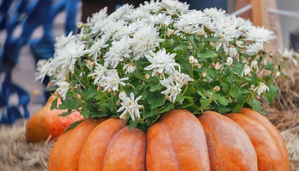 Herbstdeko: Kürbis als Vase benutzen