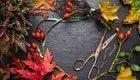 3 schöne Herbstdekos basteln aus Naturmaterialien
