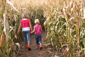Willkommen in den 5 irrsten Maislabyrinthen der Schweiz