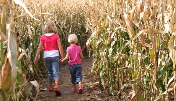 Die 5 irrsten Maislabyrinthe der Schweiz: Hier gehts lang