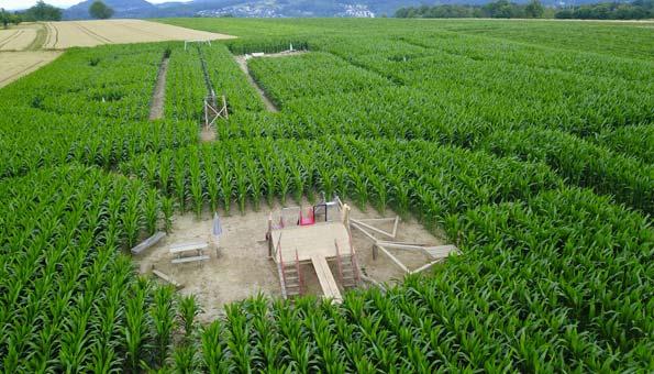Die 5 irrsten Maislabyrinthe der Schweiz: Maislabyrinth Mathis Hof Bottmingen