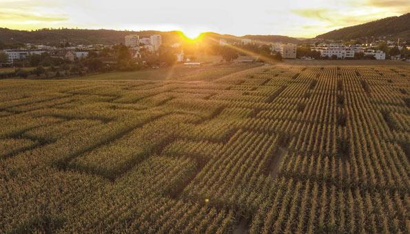 Maislabyrinth Schweiz Wettingen