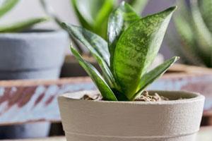 Nachhaltige Geschenke: 22 Ideen für sinnvolle Geschenke. Pflanze fürs Schlafzimmer.