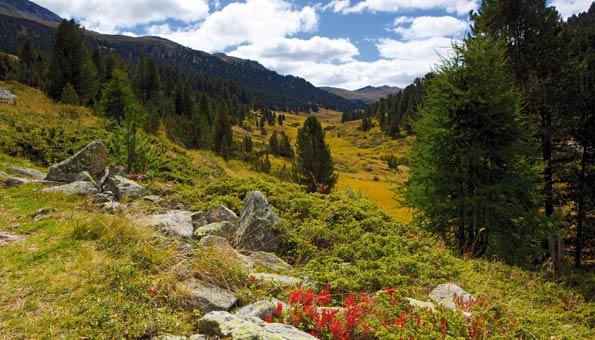 Reiseziele Schweiz: Nationalpark Engadin Graubünden