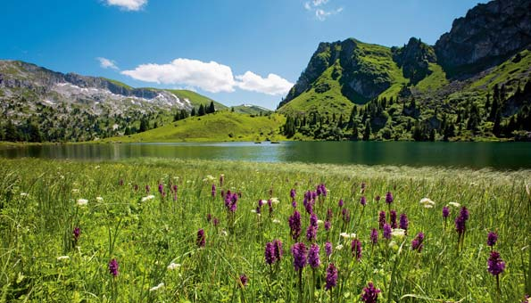 Ausflugsziele Berner Oberland: Ein Ausflug im Naturpark Diemtigtal