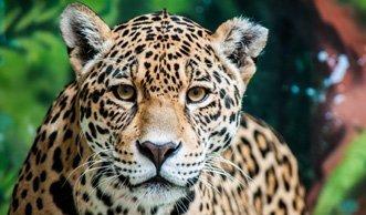 Kolumbien schafft grössten Regenwald-Nationalpark der Welt