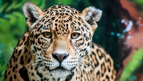 Grösster Regenwald Nationalpark der Welt in Kolumbien eingeweiht
