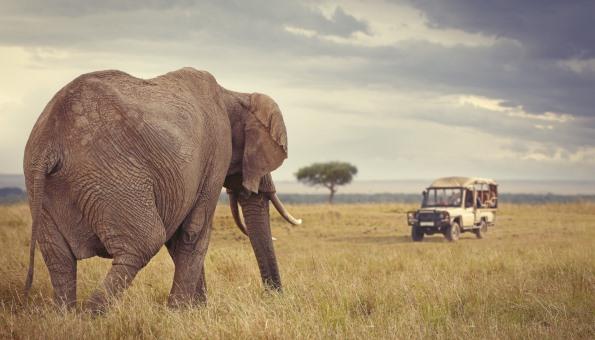 Live-Safari vom Sofa aus und damit die Wildnis Afrikas schützen