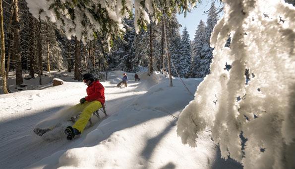 Schlitteln Gerschnialp: Am Titlis entlang nach Engelberg schlitteln