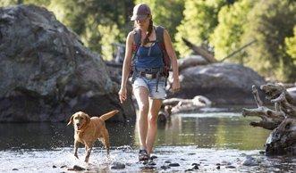 Wandern mit Hund: Die besten Routen in der Schweiz