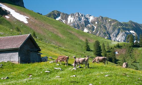 Wandern Säntis: Schwägalp
