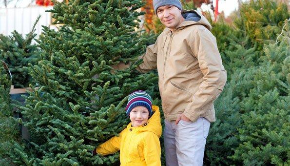 Bio-Weihnachtsbäume leisten einen grossen Beitrag für die Umwelt.