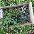 Zusammen mit Coop verlosen wir 10 Pflanzsets mit Bio-Kräutersetzlingen