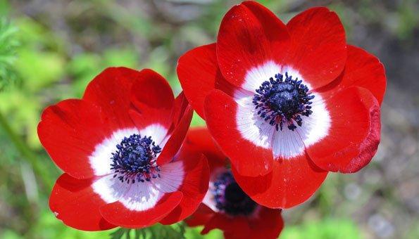 beliebte herbstblumen was bl ht auch noch im herbst. Black Bedroom Furniture Sets. Home Design Ideas