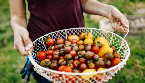 Bio-Tomaten gesünder