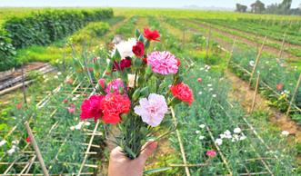 Blumen selber pflücken: Wo Sie die vielfältigsten und schönsten Blumenfelder finden