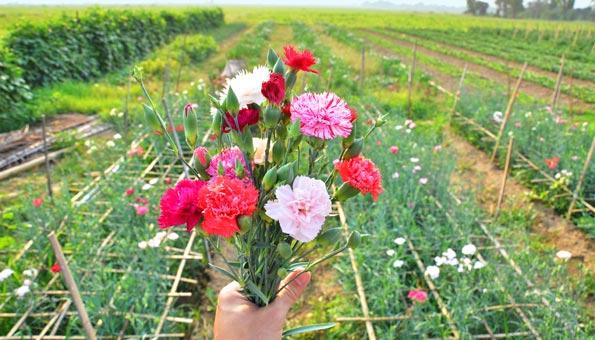 Blumen selber pflücken