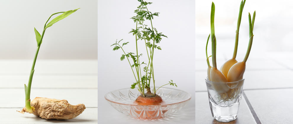 Gärtnern mit Küchenresten: So pflanzen Sie Ihr eigenes Gemüse