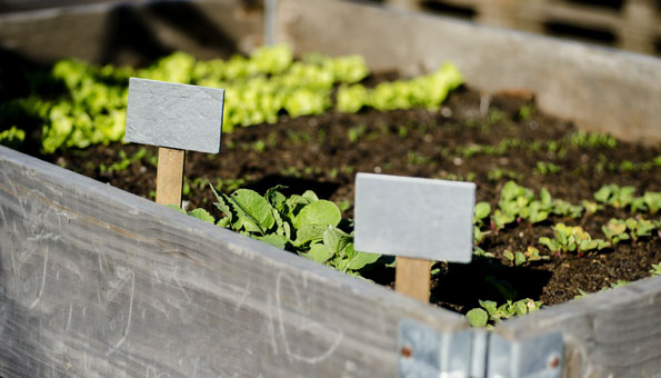 Hochbeet befüllen und bepflanzen mit Setzlingen