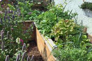 Hochbeet befüllt und bepflanzt mit Gemüse