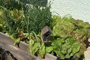 Hochbeet mit salat, Kräutern