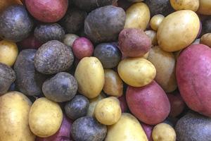 Es gibt über 100 Kartoffelsorten, die Sie pflanzen können. Besonders beliebt ist auch die Blaue St. Galler