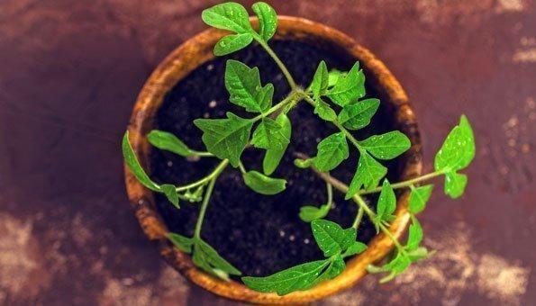 Ideen Für Den Kleinen Garten: Mit Wenig Platz Viel Ernten