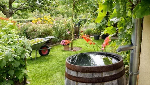 Wassertonne im Garten spart Wasser